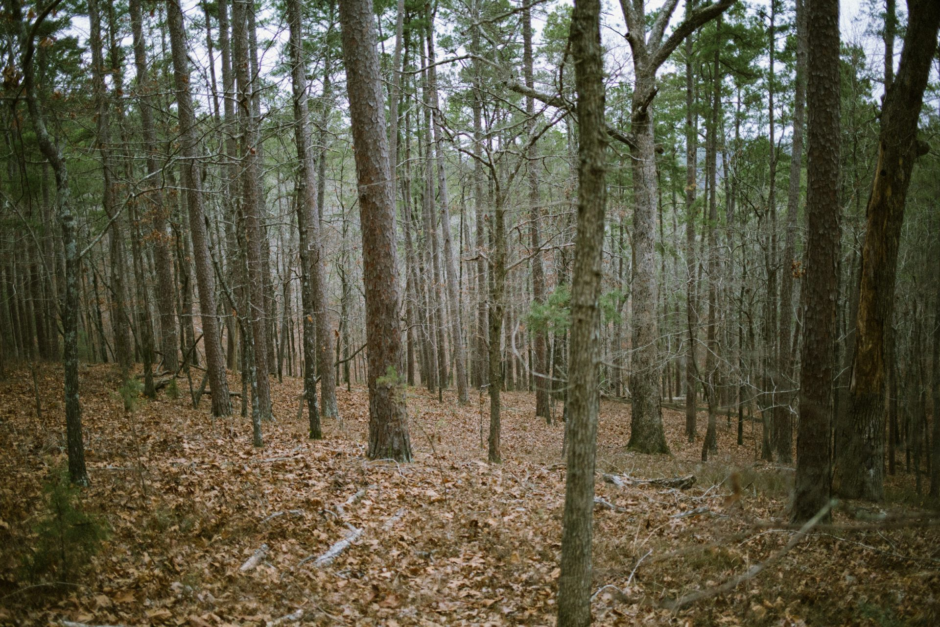 Hiking in Beavers Bend State Parking